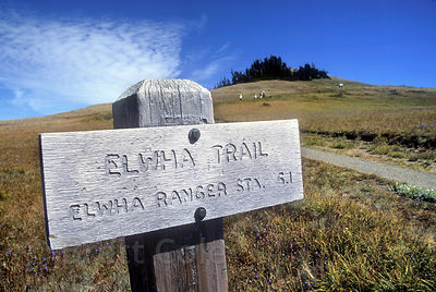 Elwha trail, Hurricane Ridge, Olympic National Park, Washington