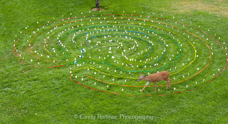 Deer Labyrinth