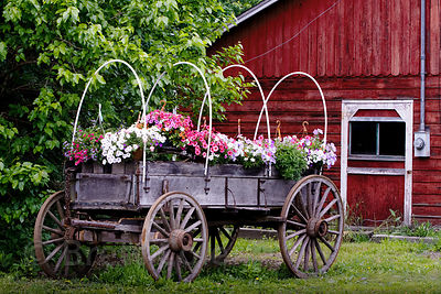 Flowers on a farm near New Paltz, New York