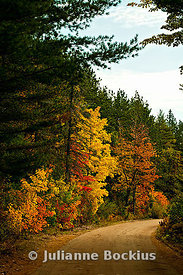 Country Road in Autumn Forest
