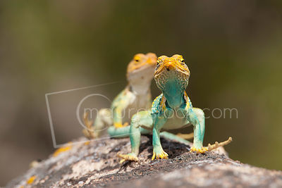 Reptiles photos