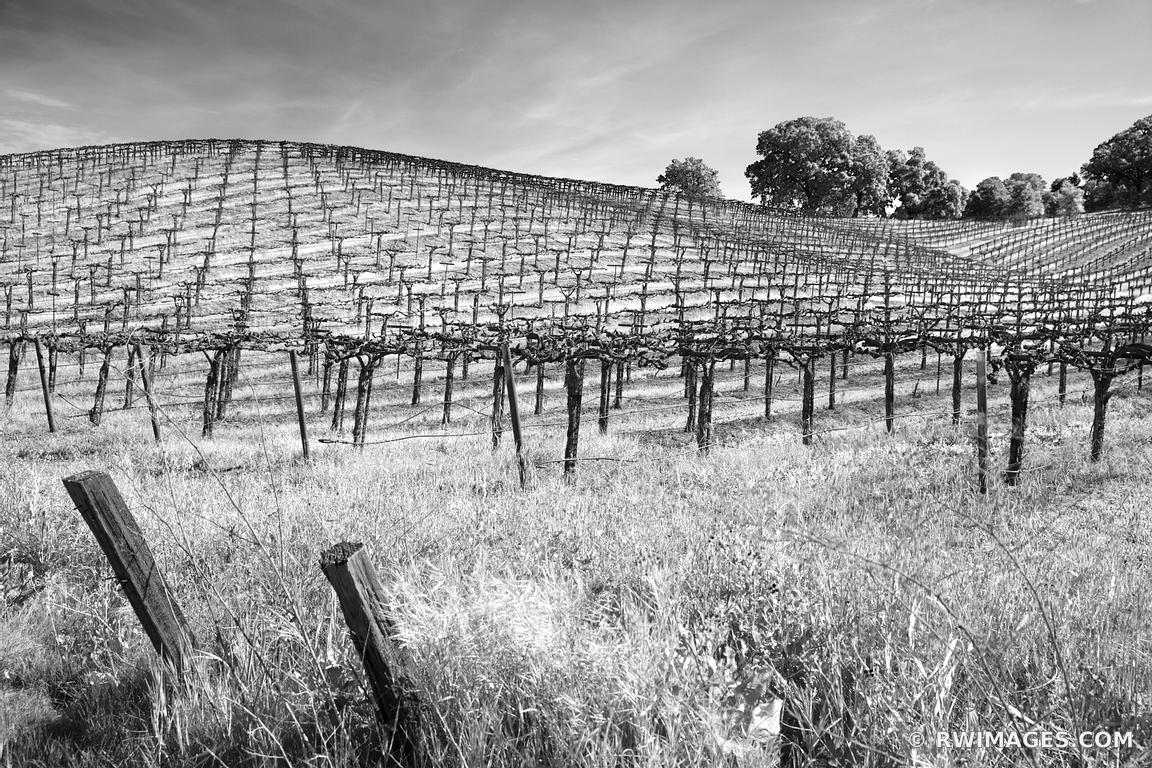 Photo print of vineyard napa valley black and white print for Photography prints to buy