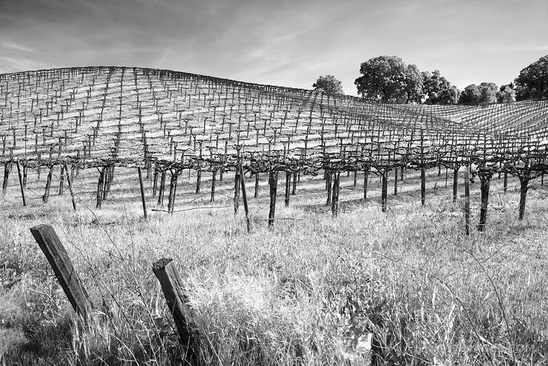 Napa Valley California - Black and White Photos Stock Photos Canvas Framed Fine Art Prints
