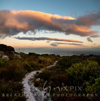A white path on a mountain top between indigenous fynbos, large pink clouds over sea below