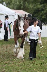 HOY_220314_Clydesdales_2354