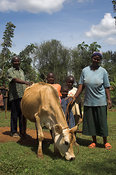 Family with their dairy cow on rope lead Kenya Africa