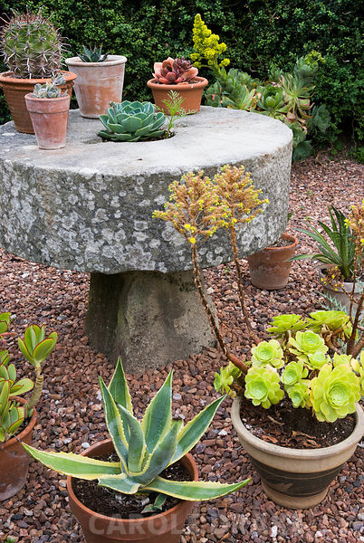 Pots of succulent plants including Aeonium arboreum surround a millstone table at the end of the swimming pool garden at Cothay Manor, Somerset