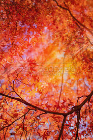 Vibrant Autum foliage background