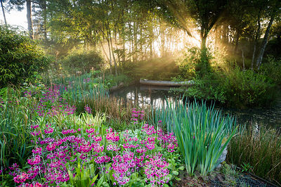 Dawn sunlight breaks through mist and trees above the pond with moored canoe, surrounded by magenta Primula pulverulenta, ferns, irises and bamboo. Windy Hall, Windermere, Cumbria, UK