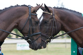 SI_Dressage_Champs_260114_386