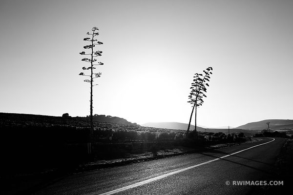 ROAD IN SANTA YNEZ VALLEY SANTA BARBARA CALIFORNIA BLACK AND WHITE