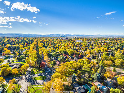Denver_Tree_Canopy