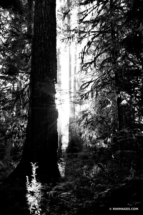 HOH RAINFOREST OLYMPIC NATIONAL PARK WASHINGHTON BLACK AND WHITE