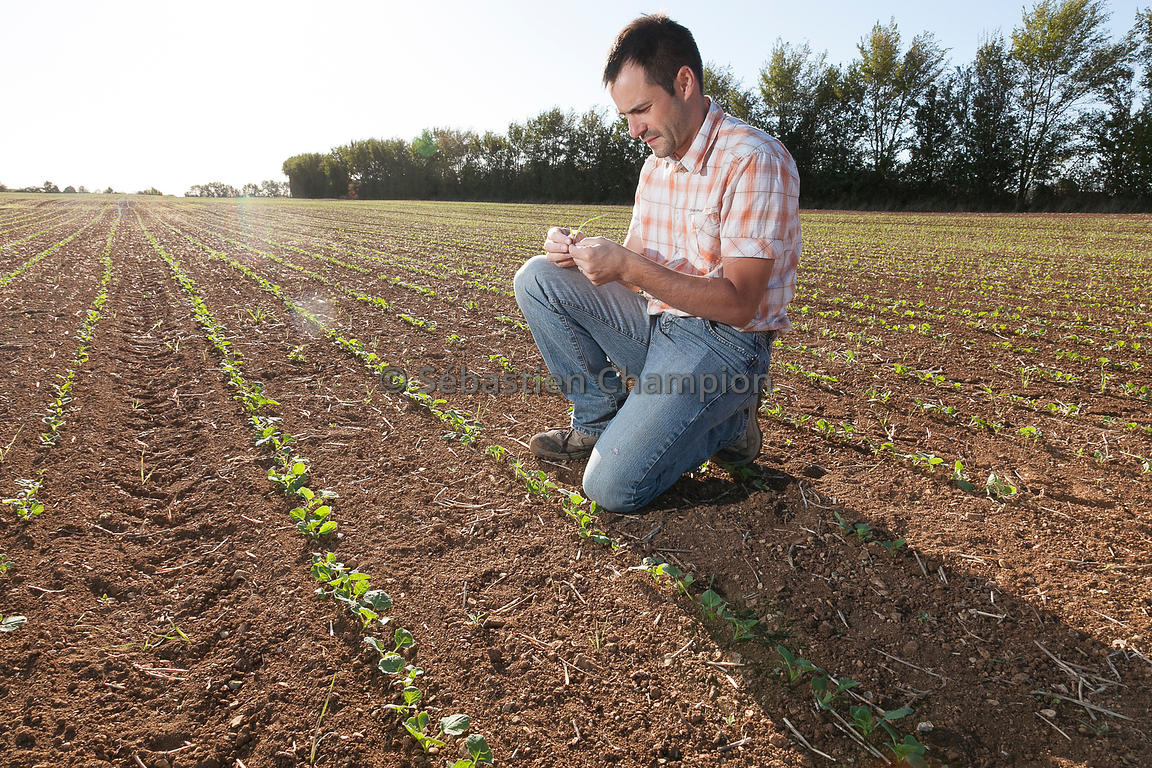 Emploi Technicien agricole recrutement  Meteojob