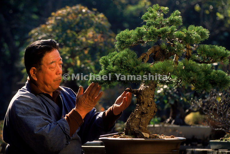 The art of Bonsai uses unnatural means to outdo nature.