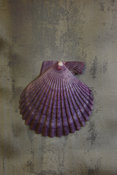Botanical Art, Purple Shell,