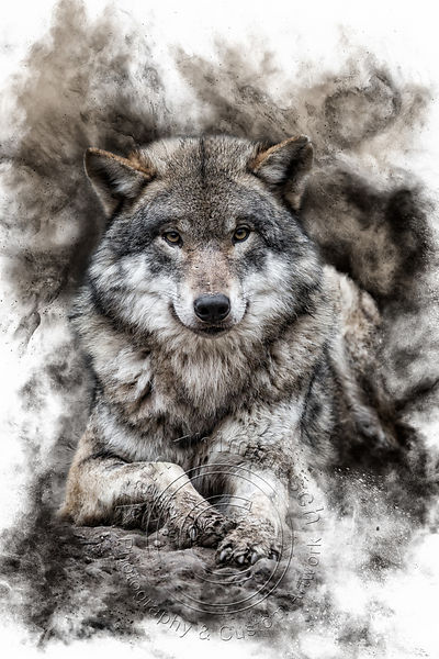 Art-Digital-Alain-Thimmesch-Loup-7