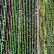 Crop Fields aerial photos