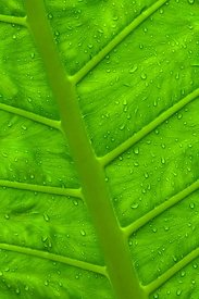 Palm Leaf and Water Drops