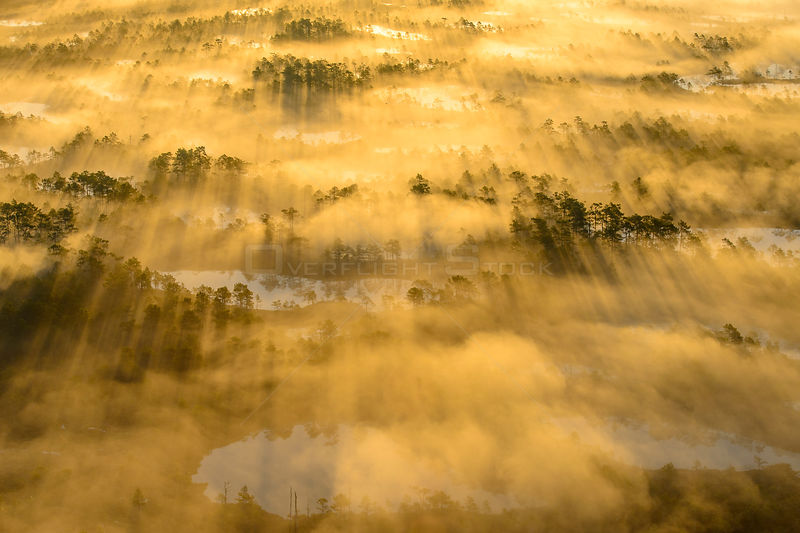 Aerial view of  fog over bog, with golden sunrise light,  Tartumaa, Estonia, May 2013.