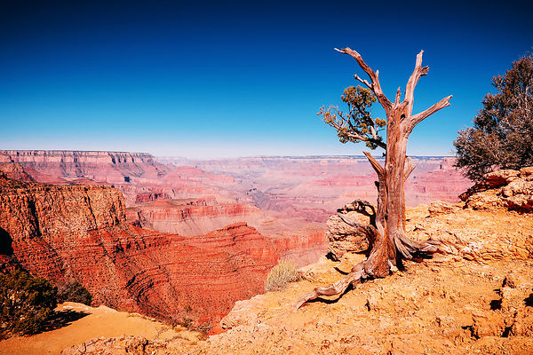 USA - Grand Canyon (2017) fotos