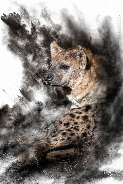 Art-Digital-Alain-Thimmesch-Animal-Divers-31