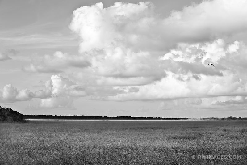 SAWGRASS PRAIRIE EVERGLADES NATIONAL PARK FLORIDA BLACK AND WHITE