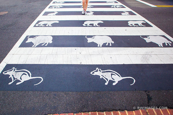 CHINESE ZODIAC SIGNS CROSSWALK CHINATOWN WASHINGTON DC