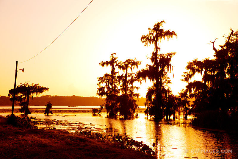 SUNSET AT LAKE MARTIN LOUISIANA SWAMP