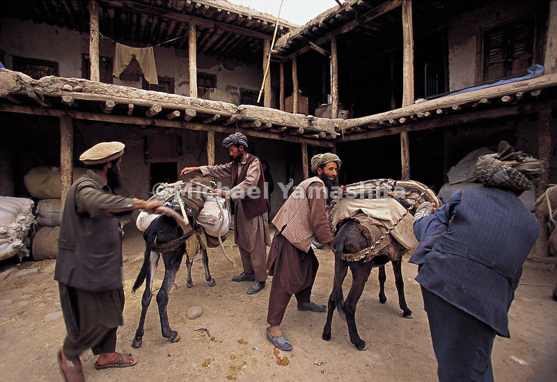 Men round up their cattle in an Afghan courtyard.