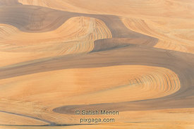 Wheat Field Pattern, Palouse Region, Washington, USA