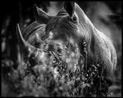 8796-Rhino_hidden_in_the_grass_Laurent_Baheux