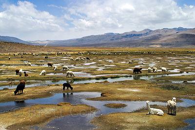 Eleven 546 Altiplano |...