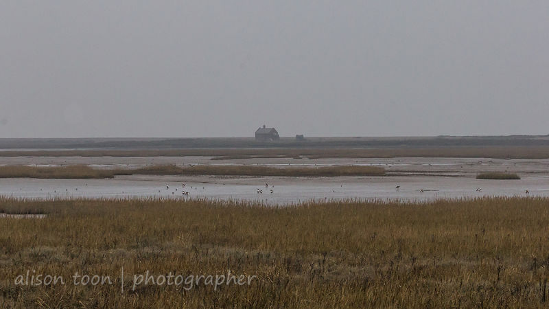 HR-NorthNorfolk-26Jan2017-8619
