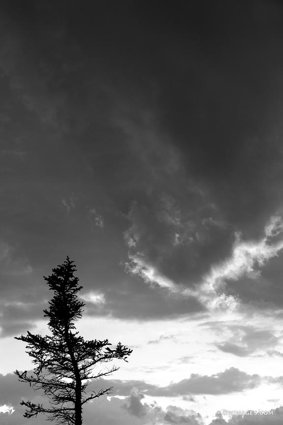 SUNSET TREE WHITE MOUNTAINS NEW HAMPSHIRE BLACK AND WHITE VERTICAL