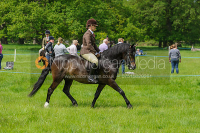 Class 24 - BSPS Heritage M&M Open Ridden Mixed Breeds photos