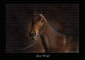 Sea_Trial_toile