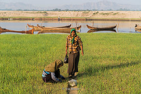 Women harvsting vegetables on the banks of  the Ayeyarwady River, Bagan, Shan State, Myanmar.