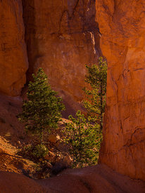Bryce_Nation_Park_335