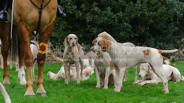Philip Hague and the VWH hounds