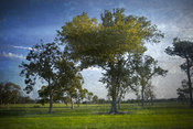 On The Back Of The Green | Landscape of Trees in Open Field