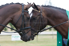 SI_Dressage_Champs_260114_388