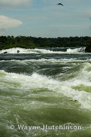 Bujagali Falls on the White Nile, near Jinja, Uganda, Africa, a popular place for White Water Rafting