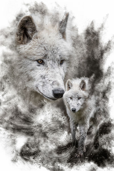 Art-Digital-Alain-Thimmesch-Loup-11