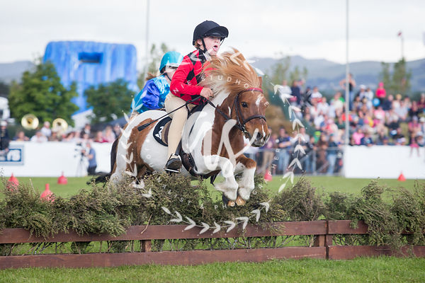 Shetland Pony Grand National photos