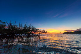 Sunset on mangrove