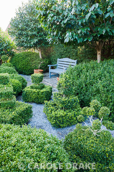 Topiary garden filled with low clipped box bushes surrounded by gravel with bench framed by Portugese laurels, Prunus lusitanica. Tony Ridler's Garden, Cockett, Swansea, UK