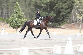 SI_Festival_of_Dressage_310115_Level_1_Champ_0683