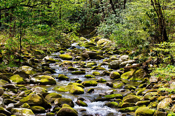 FOREST STREAM MOSSY STONES SMOKY MOUNTAINS NATIONAL PARK