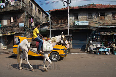 White horse and taxi in Goa Bagan, Kolkata, India